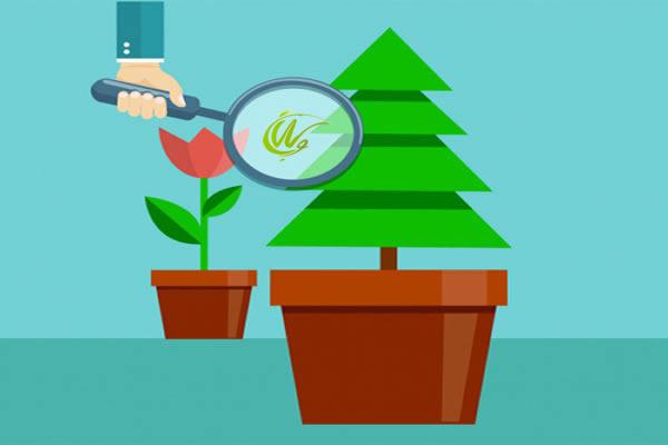 روش های تولید محتوای همیشه سبز